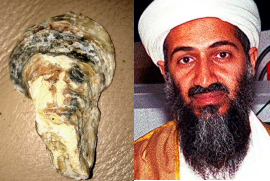 Osama Bin Laden Reincarnated as a seashell (OMG IT'S TRUE)