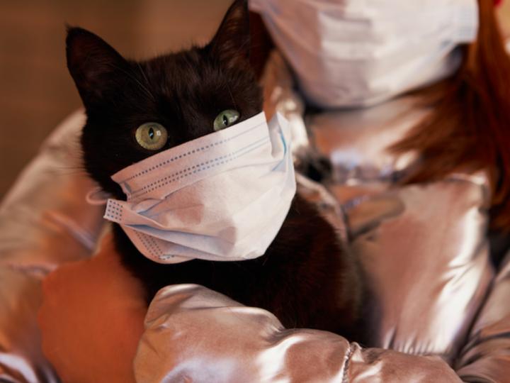 Coronavirus in Cats: Is it Real?