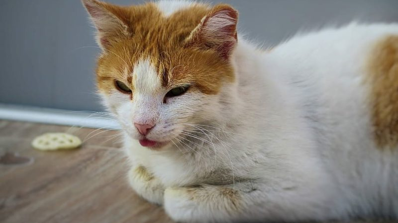 How to Treat Diarrhea in Kittens?