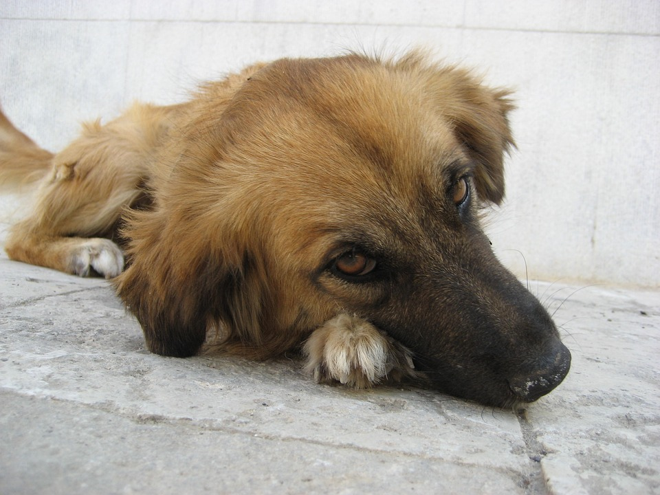 Diarrhea in Dogs – Causes, Treatment and Prevention