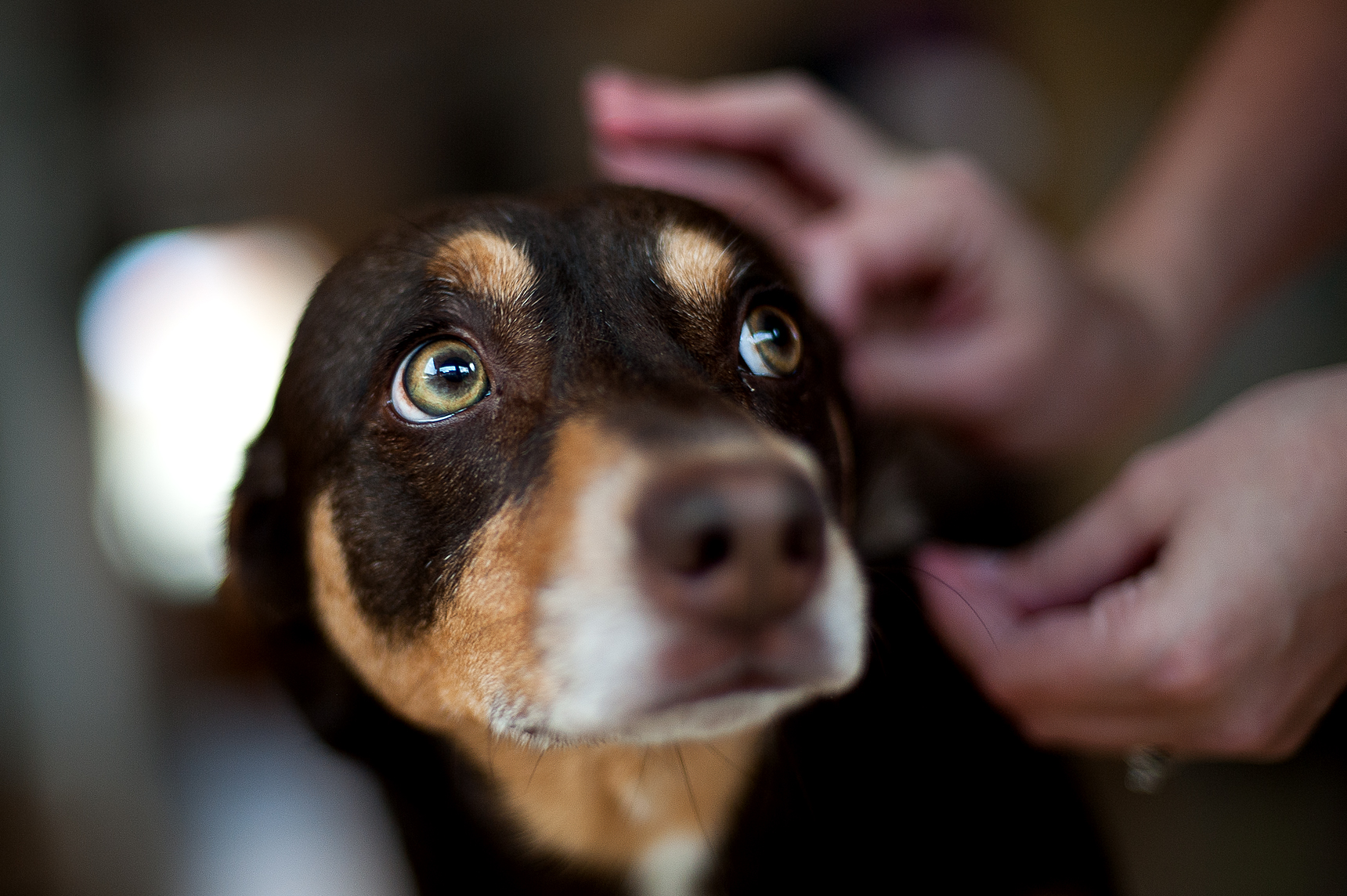 Vomiting in Dogs – Causes, Treatment and Prevention