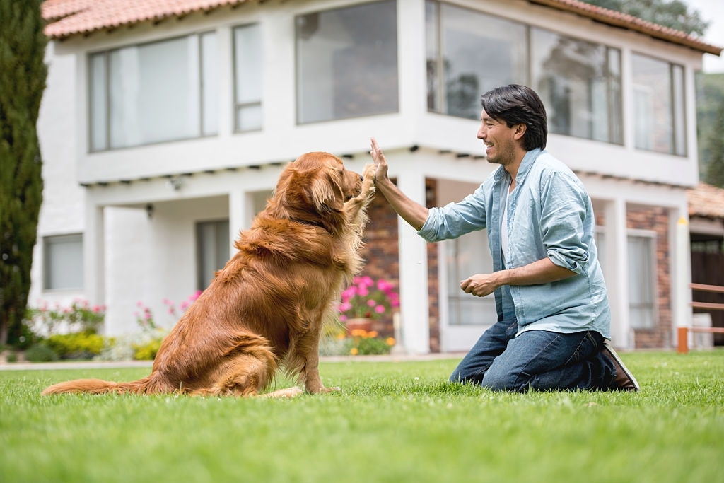 how to stop dog aggression by training
