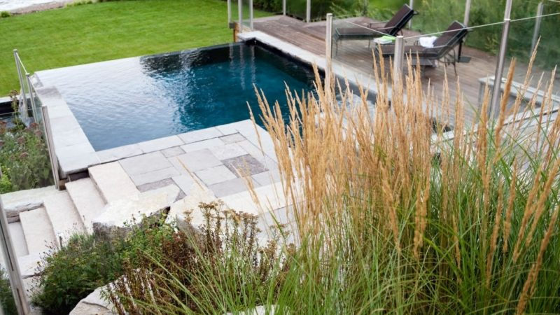 Best Plants For Landscaping Around Pool